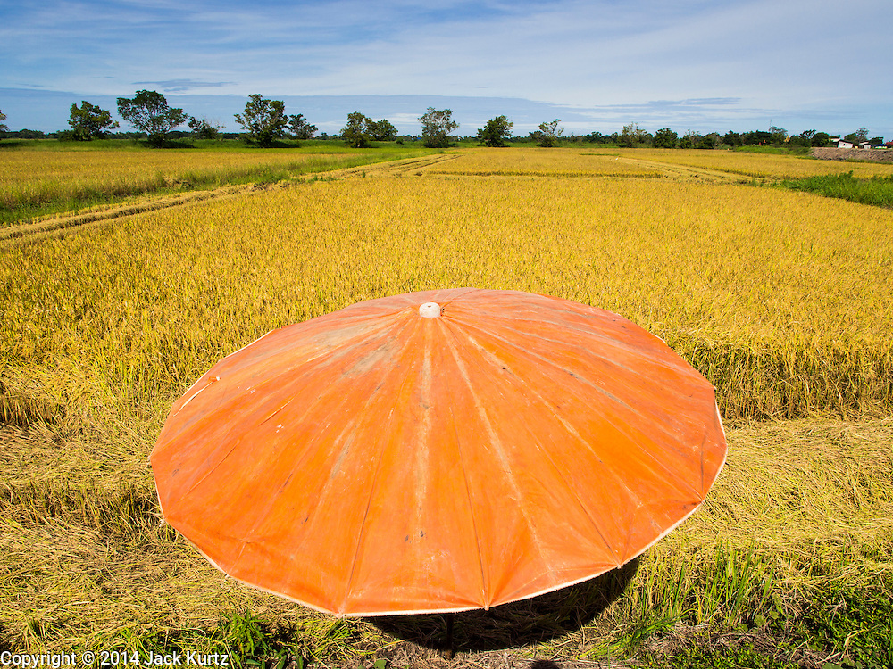08 SEPTEMBER 2014 - BANG BAN, PHRA NAKHON SI AYUTTHAYA, THAILAND: An umbrella set out by farm workers so they have shade to rest in at the edge of a rice field in Ban Bang, Phra Nakhon Si Ayutthaya province. Rice farmers in central Thailand are harvesting their rice crop. The race is on to get the rice harvested before the Chao Phraya River and its tributaries start their cycle of annual floods. Although the central plains have gotten less rain than normal, communities in northern Thailand are experiencing a heavy monsoon and flood gates upriver of the central plains have been opened. The flood waters are expected to reach Phra Nakhon Si Ayutthaya province by the middle of September. This year's rice crop is expected to be lower than last year's because many farmers planted less rice because the government subsidy program ended.      PHOTO BY JACK KURTZ