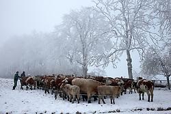 CZECH REPUBLIC VYSOCINA NEDVEZI 22DEC16 - Farmers gather their cows during winter in the village of Nedvezi, Czech Republic.<br /> <br /> jre/Photo by Jiri Rezac<br /> <br /> © Jiri Rezac 2016