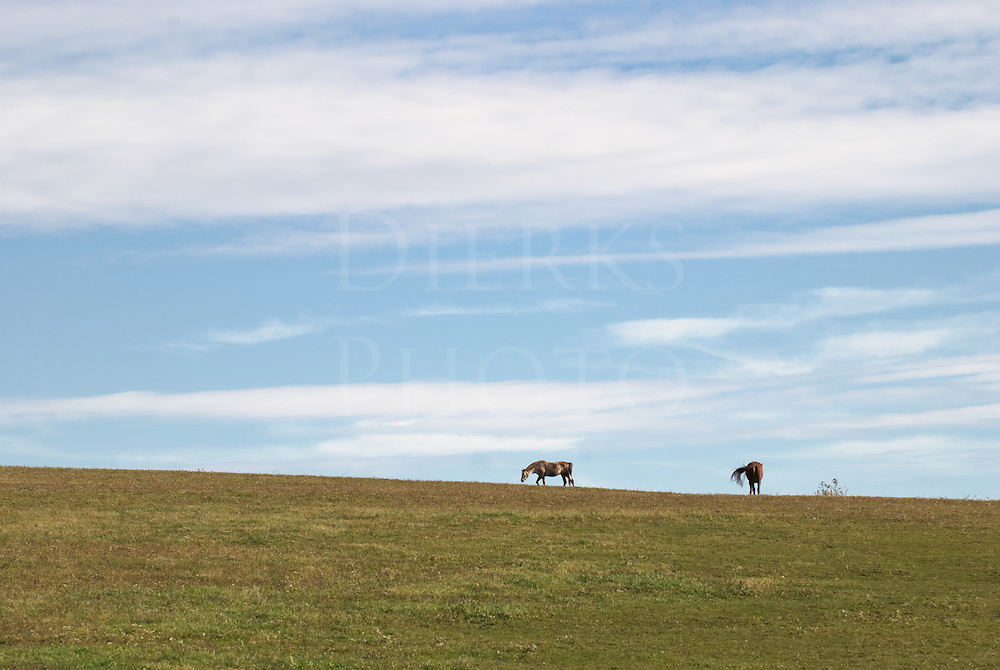 Stock photo of fair weather sky high above grazing horses.