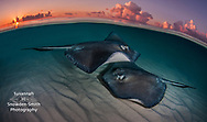 First Place, Above &amp; Below Scubashooters contest, August 2016<br />