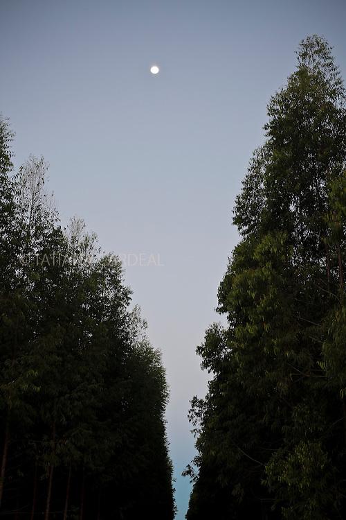 Night view of eucalyptus plantation in northern of Espírito Santo State, near Itaúnas town, Brazil.<br /> <br /> Vista noturna de plantação de eucaliptos no norte do Espírito Santo, próximo a Itaúnas, Brasil.