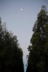 Night view of eucalyptus plantation in northern of Esp&iacute;rito Santo State, near Ita&uacute;nas town, Brazil.<br /> <br /> Vista noturna de planta&ccedil;&atilde;o de eucaliptos no norte do Esp&iacute;rito Santo, pr&oacute;ximo a Ita&uacute;nas, Brasil.
