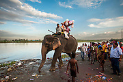 2nd September 2014, Yamuna River, New Delhi, India. An elephant ridden by handlers and a Hindu devotee carrying a Ganesh idol for immersion walks near the Yamuna River on the 5th day of the Ganesh Chaturthi religious festival at the Yamuna River, New Delhi, India on the 2nd September 2014. Devotees pay for the elephant to carry the idol into the river as its seen to be auspicious<br /> <br /> Ganesh Chaturthi is the Hindu festival celebrated in honour of the god Ganesha, the elephant-headed, remover of obstacles and the god of beginnings and wisdom.<br /> <br /> Elephant handlers (Mahouts) eke out a living in makeshift camps on the banks of the Yamuna River in New Delhi. They survive on a small retainer paid by the elephant owners and by giving rides to passers by. The owners keep all the money from hiring the animals out for religious festivals, events and weddings, they also are involved in the illegal trade of captive elephants. The living conditions and treatment of elephants kept in cities in North India is extremely harsh, the handlers use the banned 'ankush' or bullhook to control the animals through daily beatings, the animals have no proper shelters are forced to walk on burning hot tarmac and stand for hours with their feet chained together. <br /> <br /> PHOTOGRAPH BY AND COPYRIGHT OF SIMON DE TREY-WHITE<br /> + 91 98103 99809<br /> email: simon@simondetreywhite.com photographer in delhi