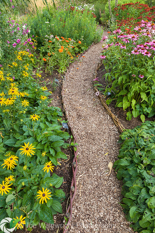 a wood chip path meanders between flower borders at RHS Garden Harlow Carr, North Yorkshire, photographed in August