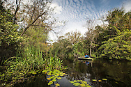 Nicole Williams  kayaks along the  Turner River in the Big Cypress National Preserve.