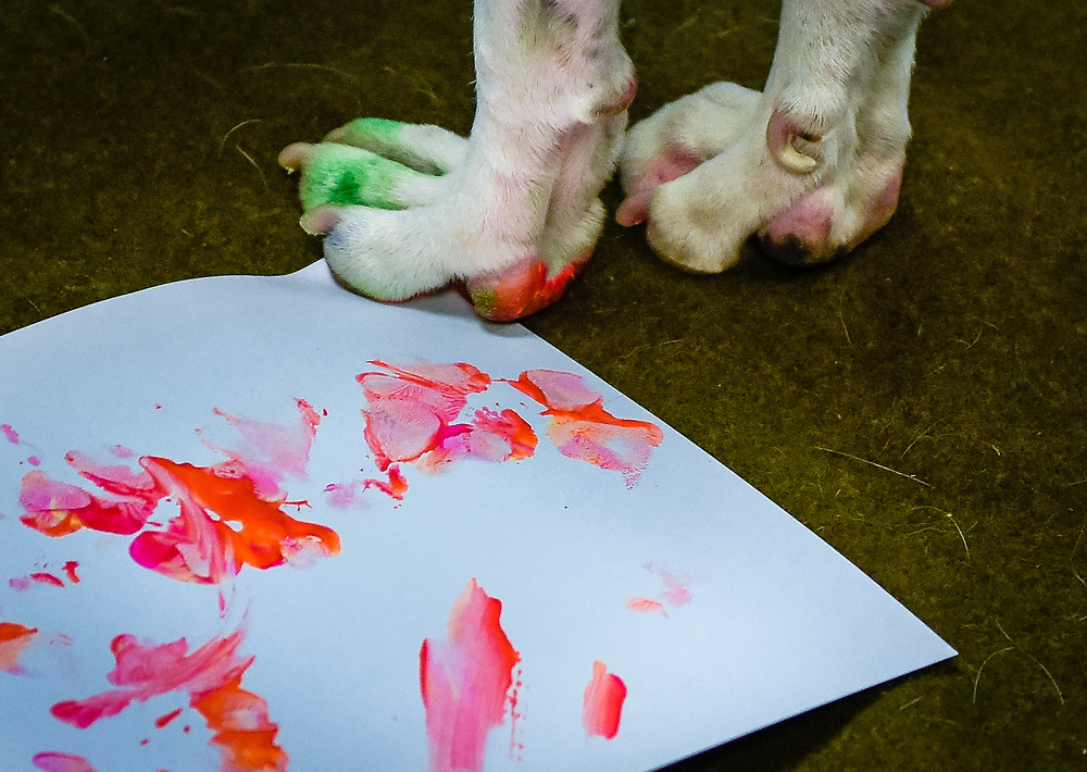 rer071017f/metro/July 10, 2017/Albuquerque Journal<br /> Artists are going to be using the paw prints of shelter pets to create new pieces, which will appear alongside the pets at an adoption event. This past Monday some animals at the shelter began getting their paw prints on canvases.  Pictured is a detail of a dog's art work.<br /> Albuquerque, New Mexico Roberto E. Rosales/Albuquerque Journal