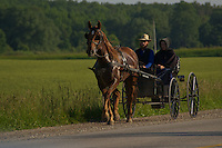 Horse pulls a buggy along a rural road near Lucknow Ontario.