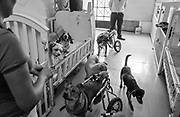 A group of dogs rush toward Sara Moran as she tosses out treats at the Milagros Perrunos shelter in Lima, Peru.