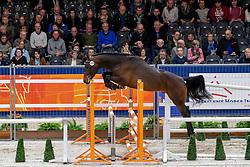 153, Collin Z<br /> KWPN hengstenkeuring - 's Hertogenbosch 2020<br /> © Hippo Foto - Dirk Caremans<br />  29/01/2020