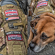 Even with all the signs, people came up to and touched and petted the dog at the parade when I was photographing.<br /> <br /> Labrador Retriever Military Service Dog  before the start of the Veteran Day Parade.  <br /> <br /> A service dog is a type of assistance dog specifically trained to help people who have disabilities, such as visual impairment, hearing impairments, mental illnesses (such as post traumatic stress disorder (PTSD)), seizure disorder, mobility impairment, and diabetes.