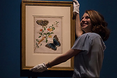 Maria Merian Butterflies exhibition | Edinburgh | 16 March 2017