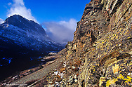 Bighorn sheep ram in the Many Glacier Valley in Glacier National Park in Montana