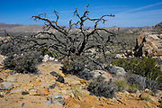 Joshua Tree National Park Desert Scenery