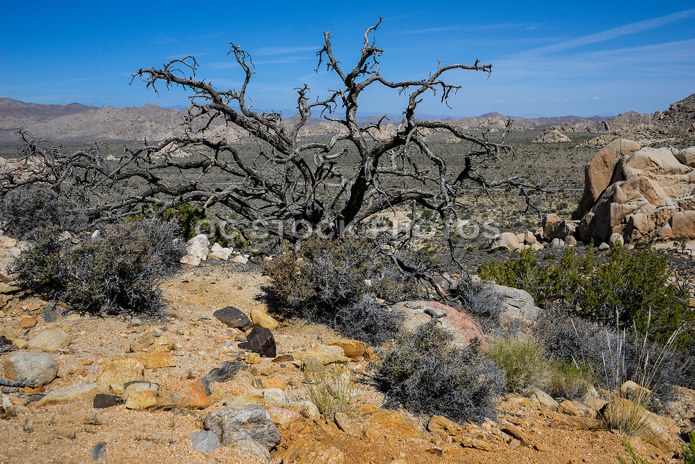 Joshua Tree National Park Desert Scenery