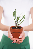 Woman Holding Potted Plant mid section