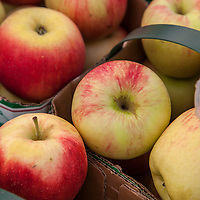 Baskets of yellow and red 'Sunrise' Apples at a farmers market.