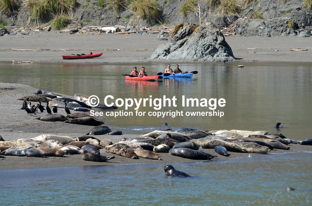 Canoeists at the estuary of Russian River near Jenner, Sonoma County, California, USA, keep their distance from a colony of seals and their pups basking on a a sandbank. 201304292119<br /> <br /> Copyright Image from Victor Patterson, 54 Dorchester Park, Belfast, UK, BT9 6RJ<br /> <br /> Tel: +44 28 9066 1296<br /> Mob: +44 7802 353836<br /> Voicemail +44 20 8816 7153<br /> Skype: victorpattersonbelfast<br /> Email: victorpatterson@me.com<br /> Email: victorpatterson@ireland.com (back-up)<br /> <br /> IMPORTANT: If you wish to use this image or any other of my images please go to www.victorpatterson.com and click on the Terms & Conditions. Then contact me by email or phone with the reference number(s) of the image(s) concerned.