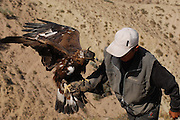 Hunting with a golden eagle. Issyk-Kul' lake, Kyrgyzstan