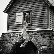 Elderly bearded man pulling a deer replica from the Kinnaspilet into a barn for storage undtil next years performance
