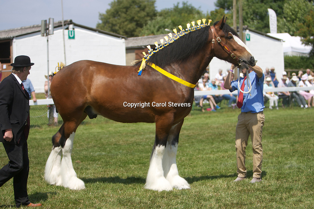 Paul Bedford's 5 year old bay gelding  Buzz<br />