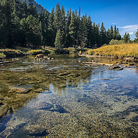 Lyell Canyon, Tuolumne Meadows JMT, John Muir, Trail, Yosemite, Mt. Whitney, 240 miles, PCT, Pacific Crest Trail,  2015.  (EricReedPhoto.com)
