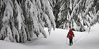 A lone ski patroller skis a grommed trail on the Mount Tahoma Trails near Mount Rainier in the Washington state Cascade Mountain Range. pan