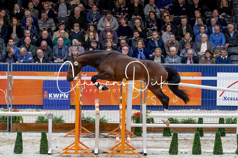 104, Lithium VS<br /> KWPN Hengstenkeuring - 's Hertogenbosch 2019<br /> © Hippo Foto - Dirk Caremans<br /> 31/01/2019