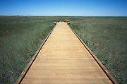 Wooden walkway through prairie grass
