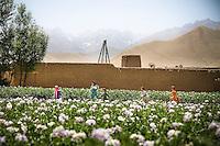 Afghan children run through field of flowers.
