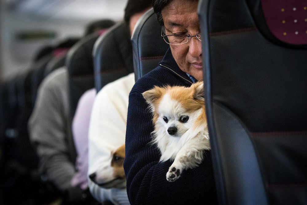"""CHIBA, JAPAN - JANUARY 27 : A man and his dog are seen in a plane in Chiba, Japan on January 27, 2017. Japan Airlines """"wan wan jet tour"""" allows owners and their dogs to travel together on a charter flight for a special three-day domestic tour to Kagoshima Prefecture, southwestern Japan. As part of the package tour, the owners and their dogs will also get to stay together in a hotel and go sightseeing in rented cars. (Photo by Richard Atrero de Guzman/ANADOLU Agency)"""