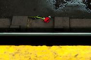 Rose on #6 subway tracks, New York, NY.