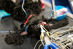 Dog under anaesthetic prior to a procedure at Rushcliffe Veterinary Centre, West Bridgford, Nottingham, UK.<br />