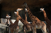 Ancien Zoo de Vincennes