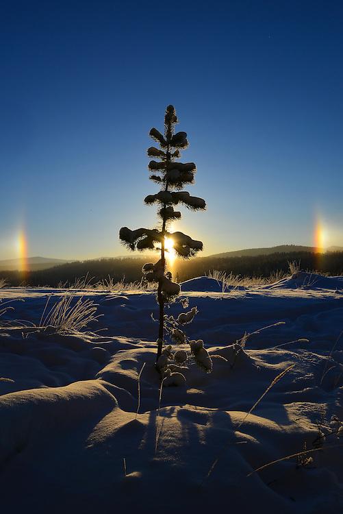 Winter sun dogs at -35C in Whitehorse, Yukon