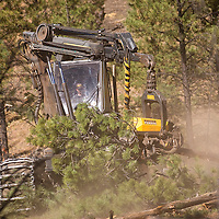 100212       Brian Leddy<br /> Mike Wanick of the company Forest Restoration Management harvests  timber in the Zuni Mountains near Post Office Flats Tuesday, Oct. 2. The small company has been contracted by National Forest Service to thin a section of forest, which had become crowded with small undergrowth.