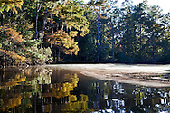 Bayou Lacombe in the Big Branch National Wildlife Refuge that leads out into  Lake Pontchartrain. Southeastern Louisiana's wetlands were threatened by the BP oil spill but containment of the Macondo well saved most of the bayous lakes and waterways that make their way to the Gulf of Mexico. Louisiana's wetlands are threaten by coastal erosion, climate change and the oil and gas industry.