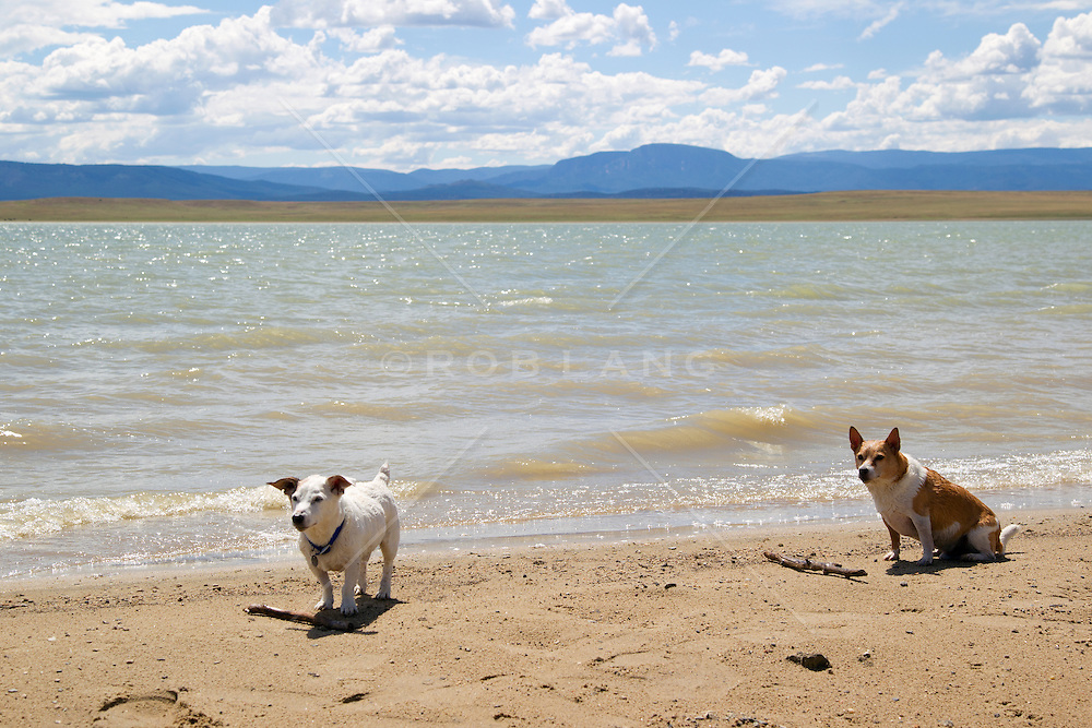 dogs by a lake in New Mexico