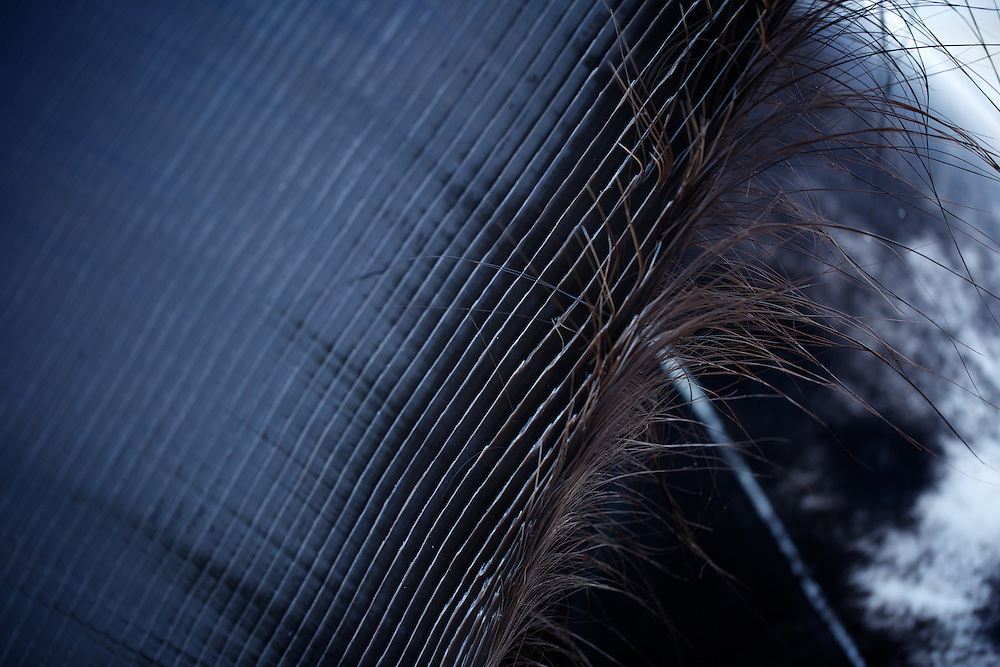 Whale baleen in Barrow, AK on September 22, 2014.