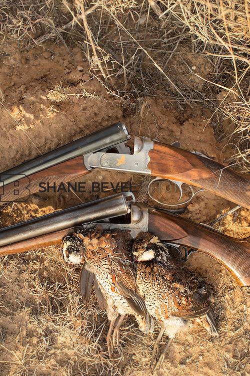 12/8/12 5:25:11 PM -- Quail hunting on the Cimarron Hills WMA in western Oklahoma. <br /> <br /> Photo by Shane Bevel