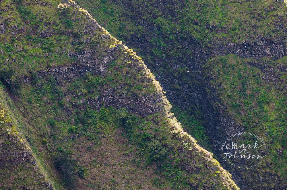 White-tailed Tropic Bird flying off the steep cliffs at Awaawapuhi, Na Pali Coast, Kauai, Hawaii
