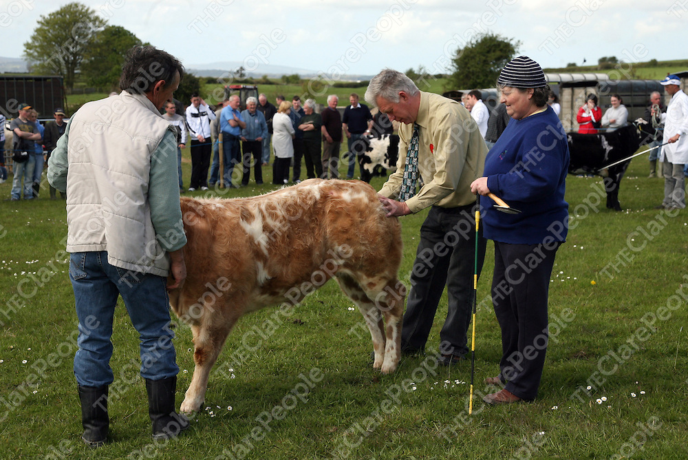 Joe Hanlon judging the Class 1 Best Female Calf at the annual Newmarket-on-Fergus show on Sunday.<br />