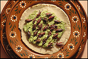 Roasted grasshoppers, chapulines, and mashed avocado on a corn tortilla, Mexico City, Mexico. (Man Eating Bugs page 107 Inset.  See also page 7)