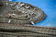 Frankrijk,Sete, 20-9-2008Een vissersnet met resten van gevangen vis uit de middellandse zee ligt op het dek van een vissersboot.A fishingnet with traces of fish caught from the Mediterranean Sea is located on the deck of a fishing boat.Foto: Flip Franssen/Hollandse Hoogte