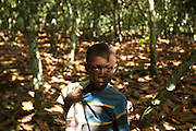 Tanic Kouakou, 8, on his father's cocoa plantation near the town of Moussadougou, Bas-Sassandra region, Cote d'Ivoire on Monday March 5, 2012.