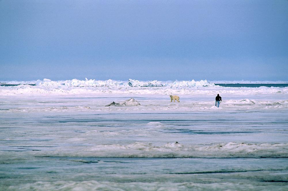 Hunting Polar bears in the Arctic
