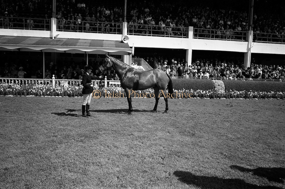 """09/08/1967<br /> 08/09/1967<br /> 09 August 1967<br /> R.D.S. Horse Show 2nd day at Balls bridge, Dublin. Photo shows the winner of the """"Joseph Widger"""" Perpetual Challenge Trophy for the best Medium weight Hunter entered in classes 17,18,19,26 and 27. Bred in Ireland. """"Ashhow"""", property of Mr. Brian Lusk, Ballypaddy Dough, Co. Antrim. Held by  Mrs Ann Davy of Belfast."""