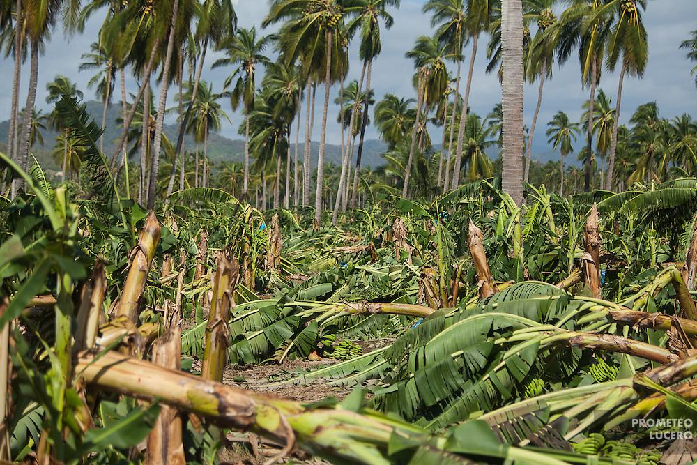Estragos causados por el Huracán Patricia en Cihuatlán, Jalisco / Aftermath of hurricane Patricia in Cihuatlán, Jalisco.  (Greenpeace /  Prometeo Lucero)