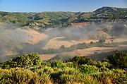 Fog Through Aliso Viejo Community