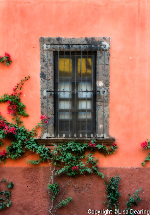 Window with Flowers and Vines, San Miguel de Allende, Mexico