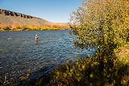 Madison River, fly fisherman, Palasades area, south of Ennis, Montana
